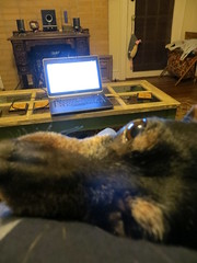 Why using a computer at home can be difficult. (Jason Riedy) Tags: dog georgia dexter eastpoint