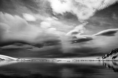 Antarctica 2013: Journey to the Crystal Desert (Christopher.Michel) Tags: penguins gentoo antarctica chinstrap adelie christophermichel corinthianii photoschristophermichel