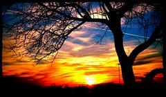 Silhouette of a tree (1suncityboi) Tags: