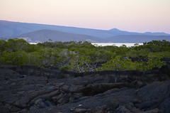 Galapagos - Fernandina Island - Sun going down (7) (sweetpeapolly2012) Tags: