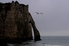 On the silent sea we have heard the sound that came from the wound wrapped in the salt sheet (stedef) Tags: sea cliff france mare seagull normandie francia dylanthomas tretat gabbiano normandia scogliera mygearandme rememberthatmomentlevel1