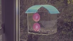 Robin22 (Gdns.) Tags: uk trees winter shadow bird window glass robin garden movie feeder hungry feed shape today ornithology