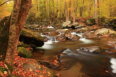 Autumn at Big Creek (MarcusDC) Tags: autumn water fallcolor appalachia bigcreek greatsmokymountainsnationalpark
