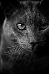0962 (vmorris414) Tags: blackandwhite eye cat nose grey whiskers meow
