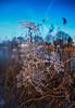 OuderAmstel (Markus Keuter) Tags: winter bevroren sneeuw nederland fujifilm zon amstel noordholland bloem ijs polarize xe1 2013 captureone xf1855mm