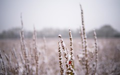 It's Freezing Out Here (pRaTuL rAgHaV) Tags: uk snow cold 35mm nikon bokeh farm united january freezing kingdom surrey land nikkor guildford d800 shallowdof f2d bokehrama