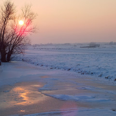 wintertime enlightened (henk hessel photography) Tags: trees winter sunset snow ice landscape frozen horizon sheeps bestcapturesaoi