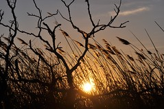 blowing in the wind.... (marie palcic) Tags: winter light sunset snow cold beach nature colors massachusetts yarmouth capecpd
