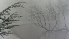 winter in dordrecht (27) (bertknot) Tags: winter dutchwinter dewinter winterinholland winterinthenetherlands dordrechtinwinter winterindordrecht hollandsewinter winterindordrcht dordrechtindewinter winterinnederlanddutchwinter