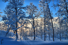 Forest - Kiruna (Oceans of Lilim) Tags: trees sun snow forest sweden kiruna