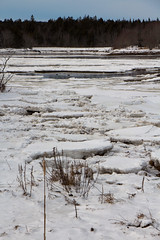 Ducks on the pond with broken ice (Scott-Simpson) Tags: winter beach novascotia getaway couples resort whitepoint babymoon