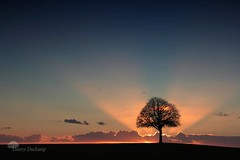 In the sunlight (photosenvrac) Tags: light sunset tree clouds soleil lumire coucher chestnut nuage arbre lucien marronnier thierryduchamp