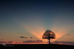 In the sunlight (photosenvrac) Tags: light sunset tree clouds soleil lumière coucher chestnut nuage arbre lucien marronnier thierryduchamp
