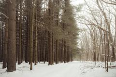Walk in a Snowy Woods (Luke Hertzfeld) Tags: park trees winter snow nature landscape woods forrest outdoor trail