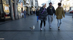 Out for a stroll with a seagull (Dublin Today) (nerosunero) Tags: people dublin seagull streetsphotography nerosunero