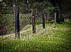 Hopeless Fence (ronWLS) Tags: grass rural fence decay country fenceposts
