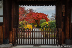 Myoshin-ji Temple, Kyoto, Japan,  (Akiko Morita) Tags: travel autumn light holiday inspiration plant flower history love nature japan architecture garden landscape temple photography japanese photo kyoto image gardening vibrant joy picture jardin historic momiji serenity   romantic meditation    inspirational maples  horticulture  japon     sensation                        myoshinji