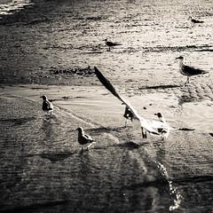 Miami (68 of 123) (The Paul Miller) Tags: ocean sea summer seagulls beach water birds mar waves florida miami august playa atlantic heat bathing avion