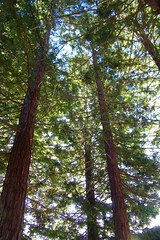 Markham Nature Park and Arboretum (Concord, California) (cseeman) Tags: california trees nature birds parks sunny redwoods paths concord bushes shrubs naturepark publicgardens publicparks arboretums californiaparks markhamnatureparkandarboretum markhamnatureparkconcord californiaarboretums