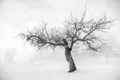 on the other side (gregor H) Tags: winter mist snow tree landscape photography austria branch harmony balance lonelytree branching asymmetric vorarlberg imbalance
