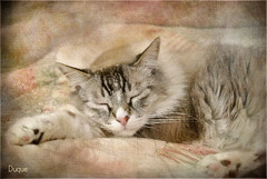 Duque 0113 (musymas) Tags: textura cat gato duque musymas magicunicornverybest