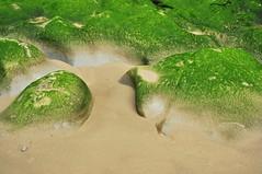 coastal (drowsySwords) Tags: statepark seaweed beach oregon coast surf oswaldwest shortsands
