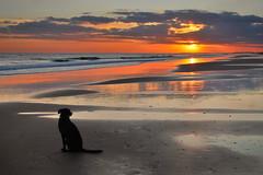 Tarde de perros (III) (Juampiter) Tags: sunset atardecer mar playa arena perro soledad esperando calma espera reflejos orilla abandono escena abandonado tranquilidad quietud lealtad vínculo dependencia fidelidad aislado contrapunto perroenlaplaya tardedeperros