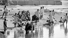 At the riverside (halifaxlight) Tags: africa bw men women donkeys sudan watching curious soe whitenile rivernile malakal flickraward theperfectphotographer