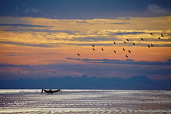 Going home (Neerod [ www.colorandlightphotography.com ]) Tags: sunset beach birds boat fisherman bangladesh silhoutte kuakata