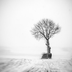 Snowstorm (MaggyMorrissey) Tags: ireland white snow storm black tree monochrome lensbaby lone carlow