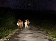 Corriendo hacias las estrellas (pedrobg) Tags: caballos estrellas wwwpedrobgcom