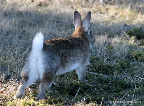 Rabbit on the Run 2