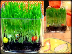 Watching the grass growing (nyomee wallen) Tags: green grass spring watching growing indoorspring