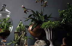 Hermetica Styling March 2013 (Ken Marten) Tags: plants orchid vintage fossil planters ammonite terrarium styling slipperorchid contemporarydesign vintagevictorian plantedarrangement