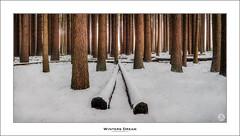 Winters Dream (John_Armytage) Tags: novaflex nisi nisifiltersaustralia johnarmytage sunrise landscape pano panorama panoramic snow sugarpineforrest laurelhill trees cold nsw australia visitnsw