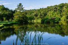 Blue Lagoon (kmac1960) Tags: water tree reflctions summer sunrise sunday green sun