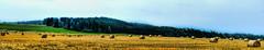 Campos dorados (Miradortigre) Tags: campo rural trigo country checa republica