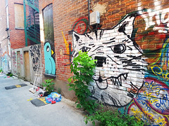 Bird and Cat - Montreal Alleys (Exile on Ontario St) Tags: bird graffiti montral mur brick wall briques plateau plateaumontroyal cat chat ruelle alleyway colors colours couleur couleurs colorful colourful writing writers back alley ruelles alleyways alleys streetart urban street art urbain backalley square squareformat montreal outdoor staircases staircase stairs escaliers colimaon extrieur dchets ordures trash dessin paint
