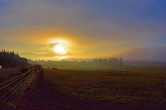 Twilight Zone (craigmeechin) Tags: waitunacanterburynewzealand interesting veryinteresting mostinteresting sunset happyfencefriday beautiful colour colourful twilight craigmeechin flickrtoday nikond3300 nikon