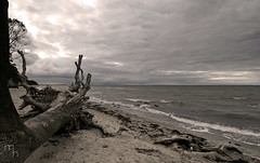 Old stuff: Rough Baltic Sea (lichtspuren) Tags: balticsea ostsee herbst rough rau clouds wolken tree baum canon eos 20d tamrom 1118mm
