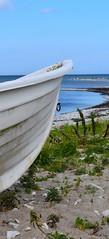 DSC_0014 (Lotsig) Tags: gotland  island sommar summer bt boat rowingboat eka roddbt fr vatten water stersjn hav sea strand beach