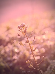 Calido (Diego Serra) Tags: sun colors soft calido planta suave
