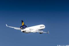 Lufthansa MD11F D-ALCC (TimSadchikov) Tags: lufthansa lufthansacargo md11 md11f trijet threeholer triholer cargo freighter yyz cyyz torontopearsonaviation toronto torontopearsoninternationalairport aviation spotting plane aircraft mcdonnelldouglas