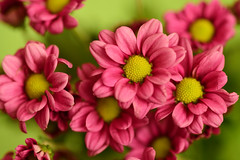 Keep love ..... (Steven H Scott) Tags: flower plant nature organic outdoor colour colourful close up macro
