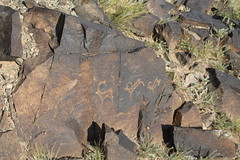 Khavtsagait - Petroglyphs (plutogno) Tags: mongolia gobi desert ibex rock carving petroglyph