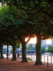 (graveur8x) Tags: couple city big frankfurt germany deutschland paar street streetphotography candid sunset trees river main stadt colours evening people bridge olympus olympusem10markii microfourthirds m43 olympusm1240mmf28 zuiko