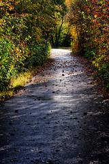 Fall Back (Mister Day) Tags: path autumn devon alberta wet