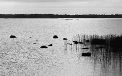 Kvarken Archipelago (@Tuomo) Tags: finland vaasa mustasaari merenkurkku kvarken archipelago bothnia sea seascape landscape bw blackandwhite nikon df nikkot 70200mm4
