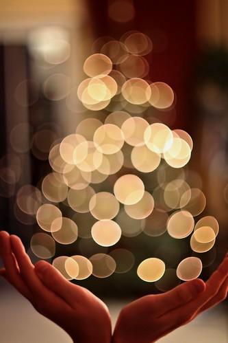 Verpackungsknstler ~ End of Christmas (Froschknig Photos) christmas hands bokeh end verpackung hnde michau canoneos650d froschknigphotos