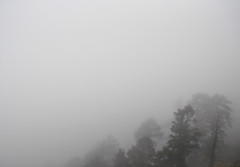 (Rosalind Chang) Tags: trees plant nature weather fog landscape branches shapes taiwan silhouettes pines hazy